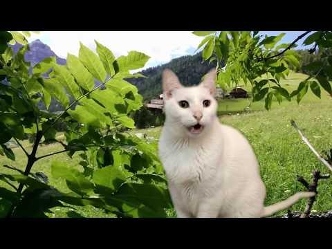 Cats Sing Classical Music - Vivaldi - Spring - Cats Version - Cats Parody
