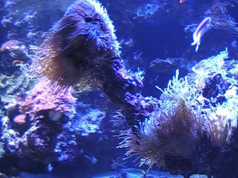 Fish Collection - Oceanographic Museum Of Monaco