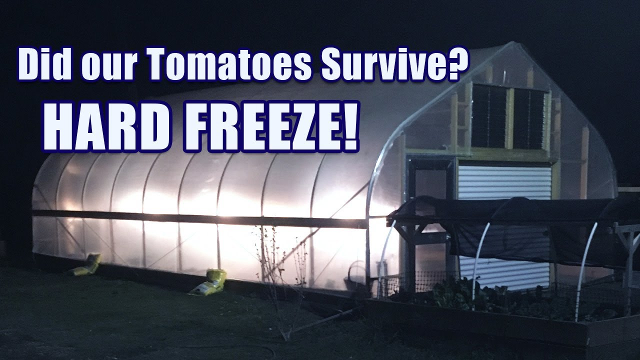 Did our Tomatoes Survive?  We had our FIRST HARD FREEZE!