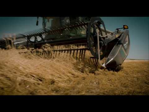 Downed Wheat