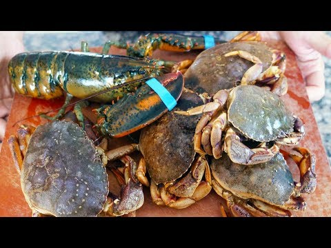Freediving For Crabs In Cape Cod And How To Make Classic Lobster Crab Rolls!