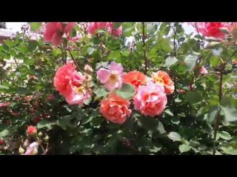 Вопрос: Какие цветы выносят жару лучше всего?