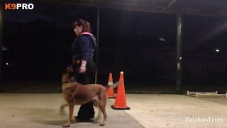 Advanced Heel Work At K9pro