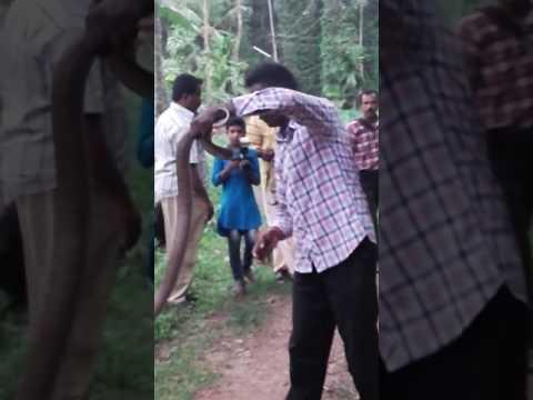 Snakemaster vava Suresh in mathra