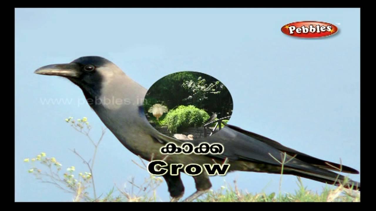 Bird S Park Pre School Words Sentences In Malayalam Preschool Education Preschool Learning Youtube