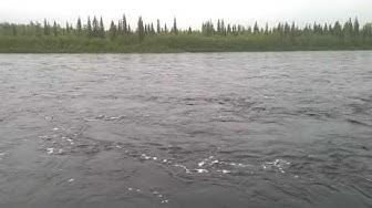 Aarean erätontit Muonionjoki varressa  | Metsähallituksen Laatumaa-tontit