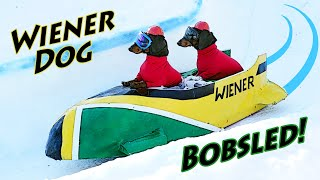 ep-7-wiener-dog-bobsled-funny-dogs-in-a-bobsled