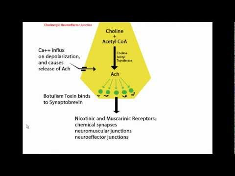 Mechanism of Botulinum Toxin (Botox) Tutorial