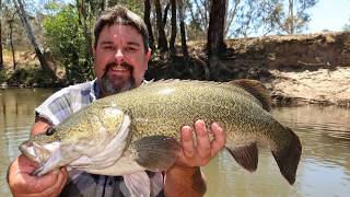Midday Murray cod mayhem catching big Murray cod in small water