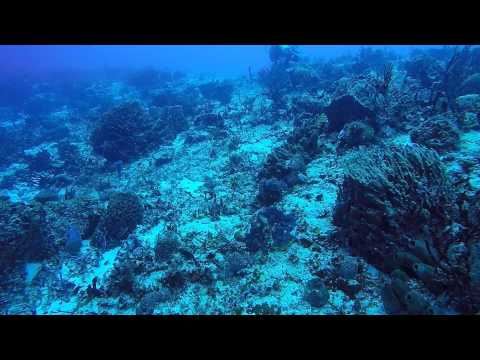 POV Diving - Cozumel - Mexico