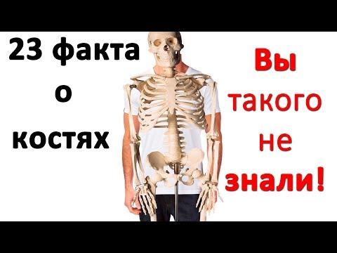Как называется наука о костях