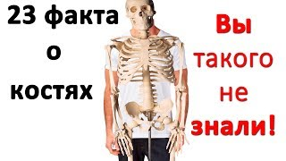 23 интересных факта о костях. Интересные факты об организме. Часть#5