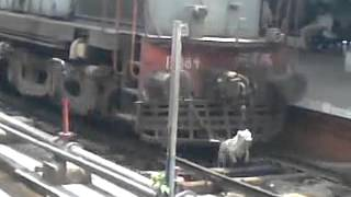 Dog under train