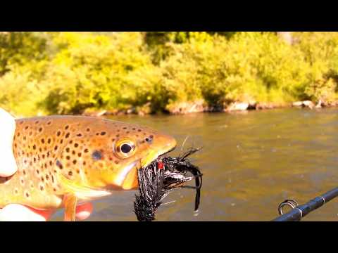 Fly Fishing in Utah - Guided Trips near Salt Lake & Park City on the Provo River
