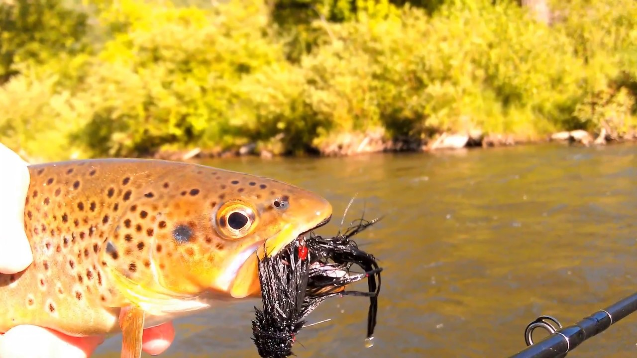 Fly fishing in utah guided trips near salt lake park for Fly fishing salt lake city