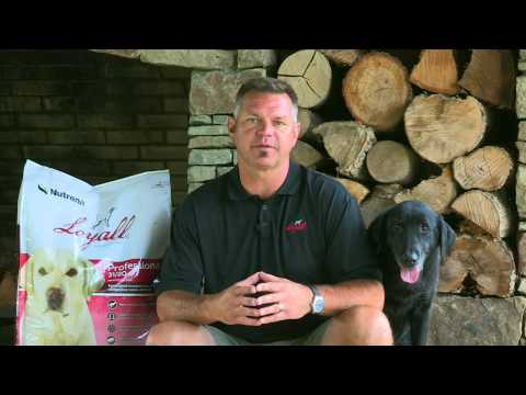 Trainer J. Paul Jackson Explains His Dogs Only Eat Loyall Professional Brand Dog Food
