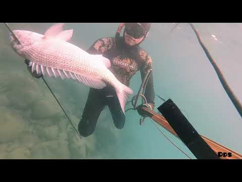 Spearfishing Best Tasting Fish You Can Not Find In The Philippines!!