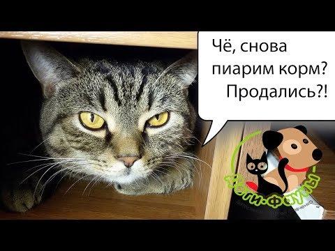 Как перевести кота на новый корм