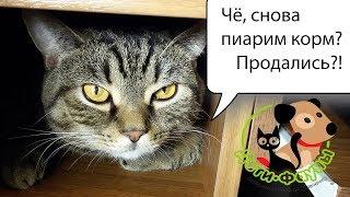 Как перевести кошку / собаку на другой корм?