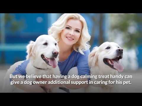 do-dog-calming-treats-really-work