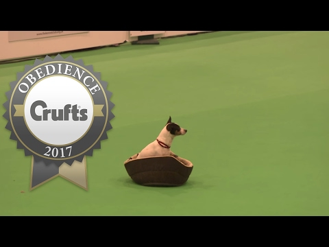 Obreedience - Scent - Part 3 | Crufts 2017