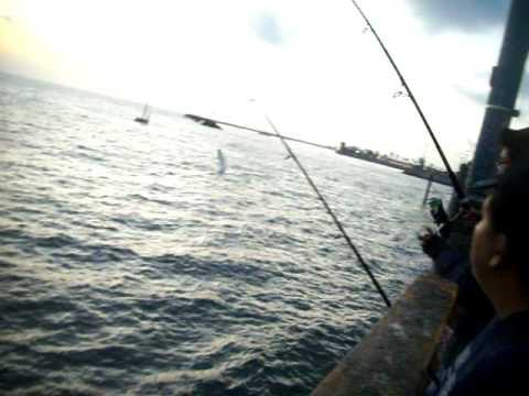 Redondo beach pier fishing mackerel youtube for Redondo beach pier fishing