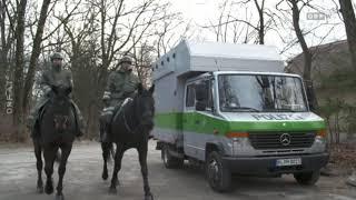 Pläne für berittene Polizei werden konkreter ORF Wien heute