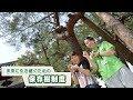 #271 さがCテレビ「保存樹制度」篇:佐賀市