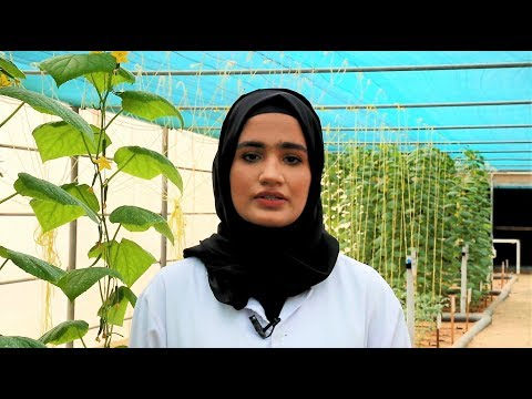 ICBA intern Hamda Al-Masoum (Zayed University, Dubai, UAE)