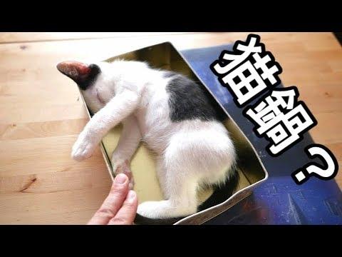 四角の猫鍋だ!NEKONABE Kitten