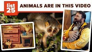 25 Weirdest Animals On Earth