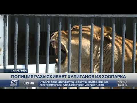 Львы из Карагандинского зоопарка начинают отходить от стресса