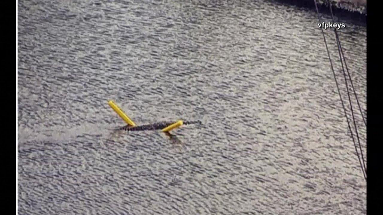Florida crocodile seen floating on pool noodle