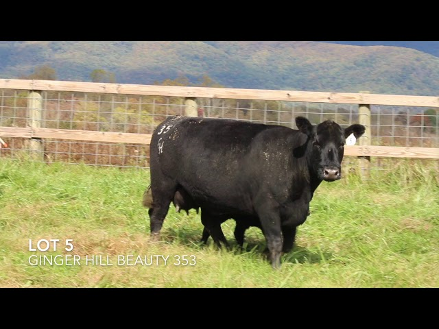 Ginger Hill Angus Lot 5