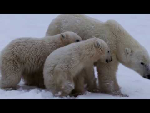 The Inuit Way of Life