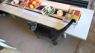 川上麻衣子さんと愛猫      撮影/伴田良輔 川上麻衣子 検索動画 26
