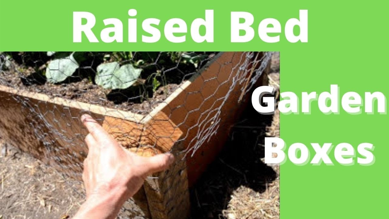 Make Mole And Gopher Proof Raised Bed Garden Boxes Youtube