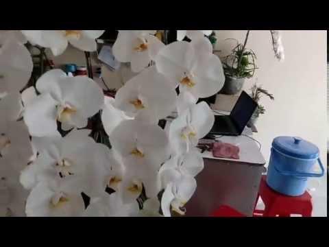 Shop Hoa Tươi DienHoa24h.net Hướng Dẫn Cắm Lan Hồ Điệp