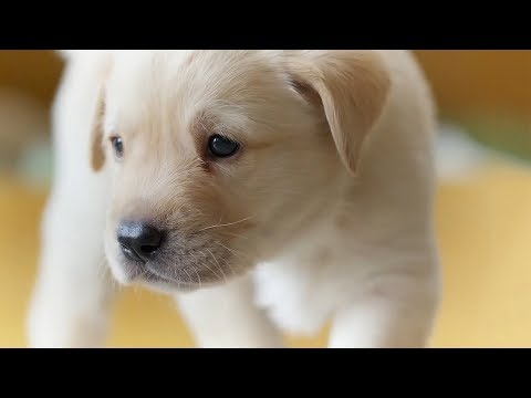 The Best Dogs Of BBC Earth | Top 5 | BBC Earth