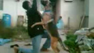 My Self Training My Dog 7 (hemanth Bangalore)