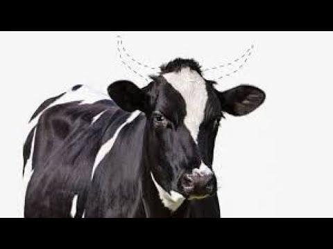 شركة أمريكية تجرب تعديل جينات الحيوانات.. رفقا بها!  - نشر قبل 32 دقيقة