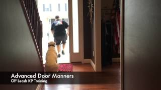 How Does Your Dog Approach An Open Door? Like Our Before Or After Video?