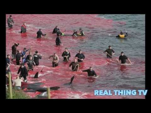 Slaughter turns the sea red with blood: Warning Graphic