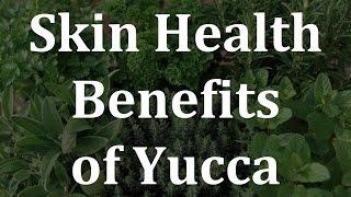 Skin Health Benefits of Yucca - Health Benefits of Yucca