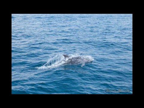 Des dauphins repérés ce matin au large de Marseille