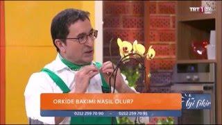Erkan Şamcı Orkide Bakımı - Karanlıkla Çiçeklendirme Yöntemi