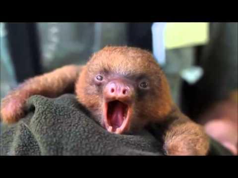 Sloth metal.