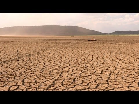 Cattle dying in South Africa as drought deepens
