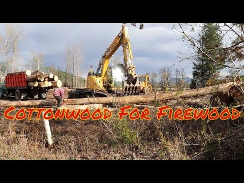 Free Firewood?
