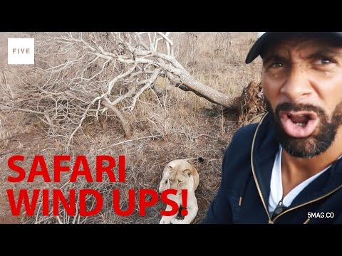 Safari Wind Up! | Rio Vlogs